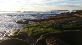 The evergreen rocks